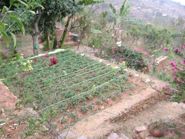 garden in Nepal
