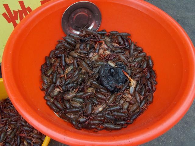 Snails, Jinan, China